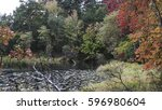 Fall Trees Around A Pond