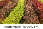 background from colorful plant | Shutterstock . vector #597047174