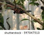 Grafting On Tree Branch