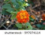 Photo Of Blooming Orange...