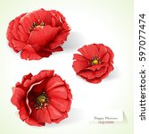 poppy flowers. illustration of... | Shutterstock .eps vector #597077474