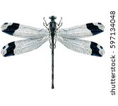 black dragonfly isolated ... | Shutterstock . vector #597134048
