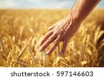 wheat sprouts in a farmer's... | Shutterstock . vector #597146603