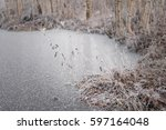 Frozen Pond Shore With Birches...