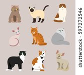 cat breed cute pet portrait... | Shutterstock .eps vector #597272546