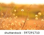 grass field in summer season... | Shutterstock . vector #597291710