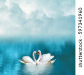 Two Graceful Swans In Love...