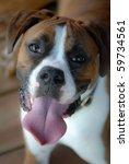 boxer dog | Shutterstock . vector #59734561