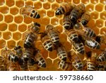 Bees On Honeycomb Eating Honey