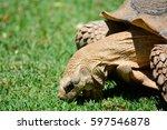 Head Shot Of A Tortoise
