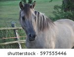 Horse Which Looks At You