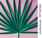 tropical leaves on pastel pink... | Shutterstock . vector #597562364