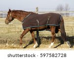 Saddle Horse Walking In Bridle...