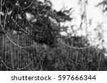 Cobweb On The Grass With Water...