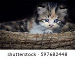Stock photo pose kitten 597682448