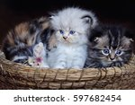 Stock photo  kitten 597682454
