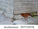 foundation repair   warning... | Shutterstock . vector #597719978