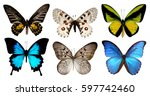 set of six butterfly isolated... | Shutterstock . vector #597742460