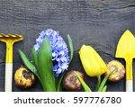 blue hyacinth yellow tulip... | Shutterstock . vector #597776780