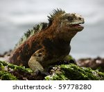 The Marine  Iguana Poses.3  ...