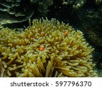 vibrant soft corals and clown... | Shutterstock . vector #597796370
