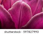 purple tulips closeup macro.... | Shutterstock . vector #597827993
