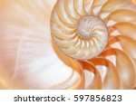 shell nautilus pearl Fibonacci sequence symmetry cross section spiral structure growth golden ratio background mollusk (nautilus pompilius) copy space half split duotone