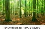 natural beech tree forest of... | Shutterstock . vector #597948293