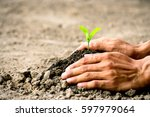 men hands are planting the... | Shutterstock . vector #597979064