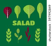 salad ingredients vector. leafy ...   Shutterstock .eps vector #597992849