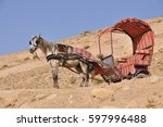 Horse With Carriage In Petra...