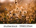 flowers in the morning | Shutterstock . vector #598013564
