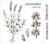 lavender set.  botanical... | Shutterstock .eps vector #598014110