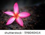 flower in the dark. | Shutterstock . vector #598040414