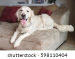 golden retriever sitting on a...   Shutterstock . vector #598110404