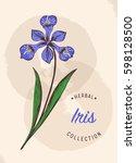 iris vector. wildflowers...   Shutterstock .eps vector #598128500