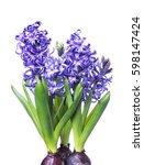 Three Hyacinth Isolated On White