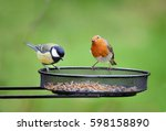 Stock photo garden birds european robin erithacus rubecula and great tit parus major on seed tray feeder in 598158890