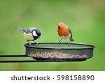 Garden Birds. European Robin ...