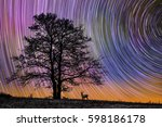 star trails behind tree