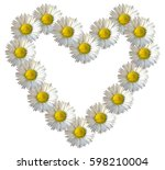 Daisy Flower Heart. White...