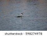 western grebe swimming around... | Shutterstock . vector #598274978