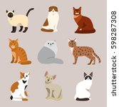 cat breed cute pet portrait... | Shutterstock .eps vector #598287308