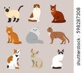 cat breed cute pet portrait... | Shutterstock .eps vector #598287308