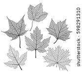 set leaves maple of black on...   Shutterstock .eps vector #598291310