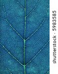 blue leaf. super macro. | Shutterstock . vector #5983585