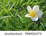 white flower over green grass... | Shutterstock . vector #598401473