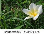 white flower over green grass... | Shutterstock . vector #598401476