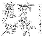 tea plant graphic black white...   Shutterstock .eps vector #598439813