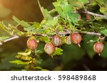 Fresh Red Gooseberries On A...